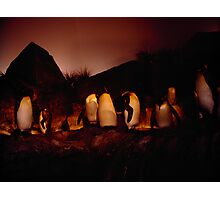 Penguin House Photographic Print