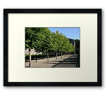 Trees of Rolduc Framed Print