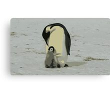 Penguin Duo Canvas Print