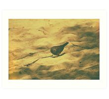 Spotted Dove Art Print
