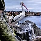 Pelican by EbonyKate