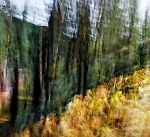 Free Forest by Alexander Zabara