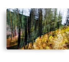 Free Forest Canvas Print