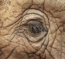 ELEPHANT EYE by Larry Glick