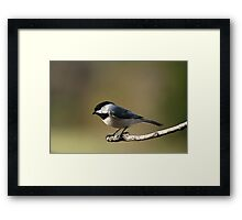 Life in the balance.... Framed Print