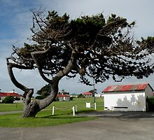 Wind Blown Tasmania by Sandra  Sengstock-Miller