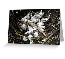 Gator Hatchlings Greeting Card