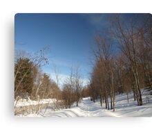 P2030095 Winter scene Canvas Print