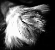 Paw by Tommy Seibold