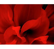 Shades of Red Photographic Print