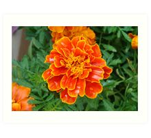 Orange Marmalade Art Print