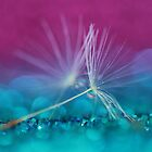 Used Wishes are Magic too by Melinda Potter