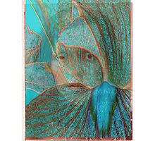 me blue ghost Photographic Print