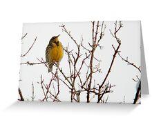 Western Meadowlark - Winter Greeting Card