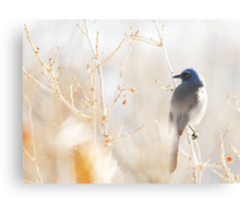 Scrub Jay in Weeds Metal Print