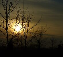 Sunset behind the trees.. by nfsnyc