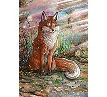 Holy Fox Photographic Print