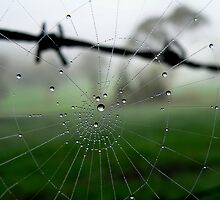 Barbed Wire and Web Dew Drops by BecsPerspective
