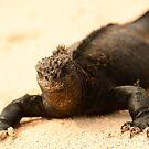 Black beach marine iguana by Derek McMorrine