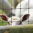 Peek - A - Boo! by Vicki Spindler (VHS Photography)