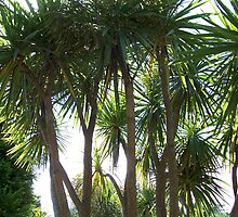 PALM TREES 1 by DARREL NEAVES