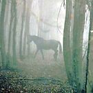 Equestrian Dream by Chris Coetzee