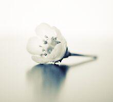 White Secret by Marianne Le Carrour