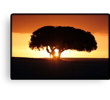 On African Soil Canvas Print