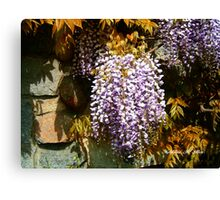 Wisteria Clinging Vine Canvas Print