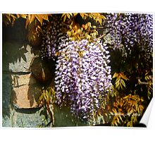 Wisteria Clinging Vine Poster