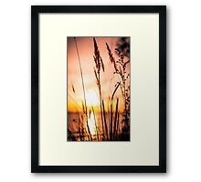 No shades needed Framed Print