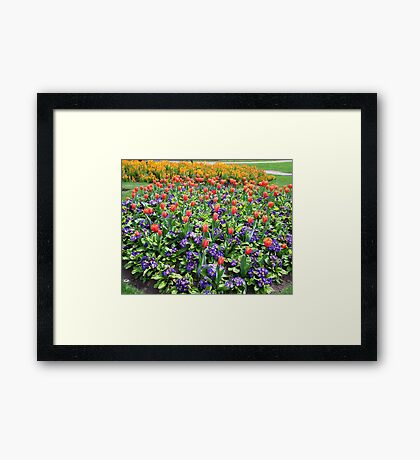 Tulips On Display (2) Framed Print