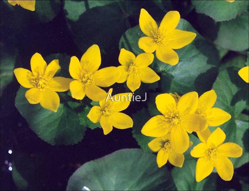 Marsh Marigolds by AuntieJ