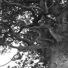 knarly tree by CinB