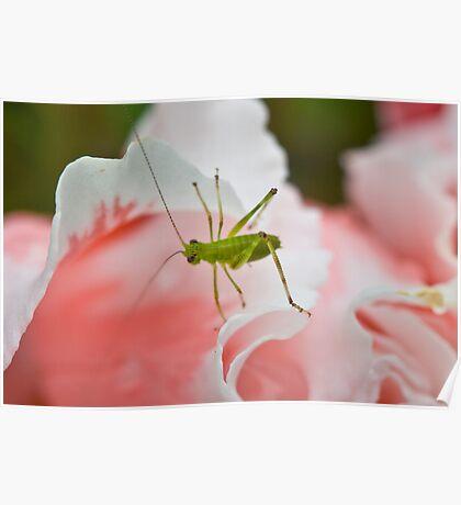 Grasshopper on Pink Flower Poster