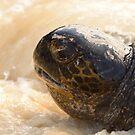 Marine turtle by Derek McMorrine