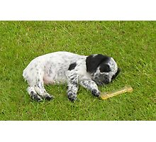 Tired puppy Photographic Print