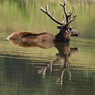 Elk in the Mirror by Jim Caldwell