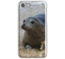 Cornish Seal 4 iPhone Case/Skin