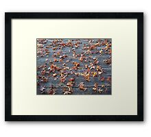 "This is why they call ""Autumn"", ""Fall""! Framed Print"
