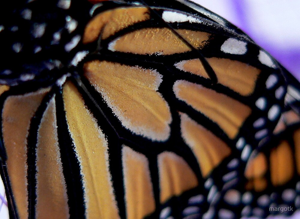 Close-up of a Monarch Butterfly's Wing by margotk