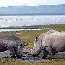 Heavy weights line up by Lake Nakuru by jacqi