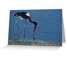 Saddlebill Stork - Okavango Delta - Botswana Greeting Card
