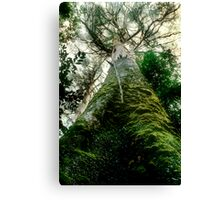 Old Growth Mountain Ash Canvas Print