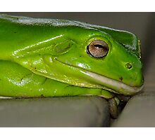 Froggy Profile Photographic Print