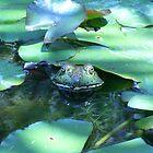 The bullfrog.  by SunKen