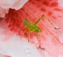 Grasshopper on Pink Flower 2 by Mark Snelson