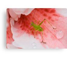 Grasshopper on Pink Flower 2 Canvas Print