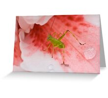 Grasshopper on Pink Flower 2 Greeting Card