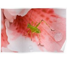 Grasshopper on Pink Flower 2 Poster